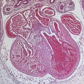 Stem cell physiology - 2
