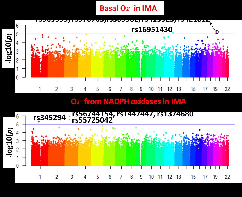 PP84-Basal O2 in IMA.png