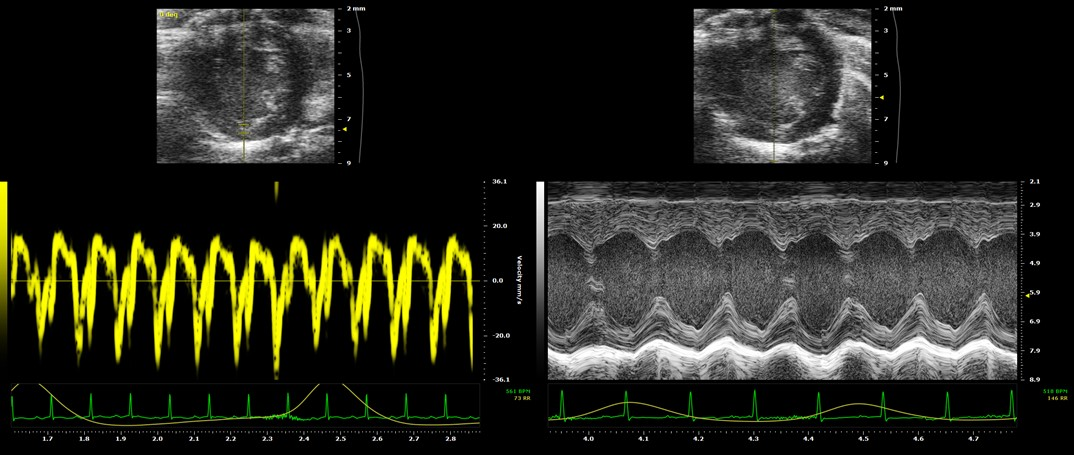 Doppler and light contrast measurements of E180G Mice acquired by Echocardiography.